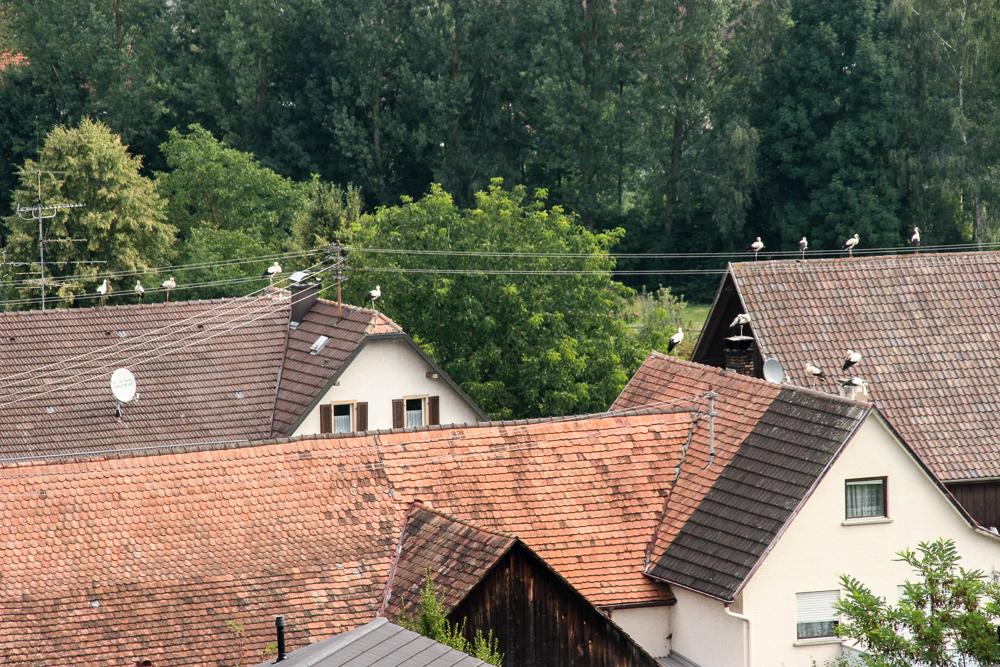 Störche auf den Dächern von Wahlwies